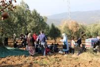 Çocuklar Zeytin Toplama Heyecanı Yaşadı