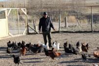 TAVUK ÇİFTLİĞİ - Emekli Oldu, 'Boş Durmak Bana Göre Değil' Diyerek Tavuk Çiftliği Kurdu