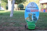 Burhaniye'de Sokak Hayvanlarına Suluk