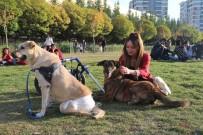 HAYVAN SEVGİSİ - Evinde 10 Hayvan Besleyen Kadın, Veteriner Hekim Olmak İçin 3. Üniversiteyi Okuyor