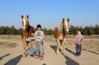 1 MAYıS - İzmir'in Fayton Atları İkinci Baharlarını Bursa'da Yaşıyor