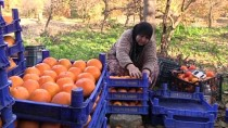 BAŞKÖY - 'Baştacı Kadınlar' Hurma İle Ayağa Kalktı