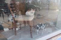 HAYVAN SEVGİSİ - Küçük Çocuğun Dikkati Kedilerin Hayatını Kurtardı