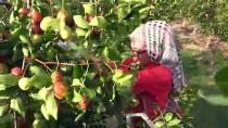 AHMET YıLMAZ - 'Ölümsüzlük Meyvesi' Hünnaptan Pekmez Üretti