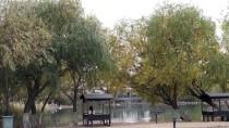 GÖÇMEN KUŞLAR - Gölbaşı Gölleri Tabiat Parkı'nda Sonbahar Güzelliği