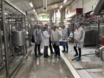 İstanbul'da Süt Ve Süt Ürünleri İşletmelerine Denetim