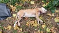 Okul Bahçesinde Köpeği Bıçakladılar