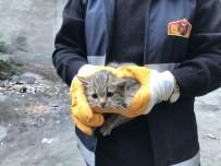 Yavru Kedi Özgürlüğüne Kavuştu