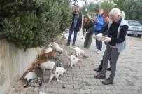 TURİZM SEZONU - Didimliler Sokak Hayvanlarına Sahip Çıkıyor