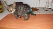 (Özel) Ölmek Üzere Olan Yavru Kedinin Büyük Değişimi