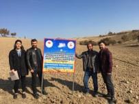 Tunceli'de Tritikale Demonstrasyonu İçin Ekimler Yapıldı