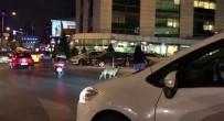 (Özel) Kadın Sürücü Trafiği Durdurup, Yaya Geçidinde Bekleyen Köpeği Yolun Karşısına Geçirdi