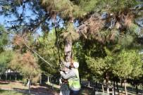 NENE HATUN - Toroslar'daki Parklarda Ağaçlar Budandı
