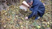 SEMENDER - Benekli Semender Doğaya Bırakıldı