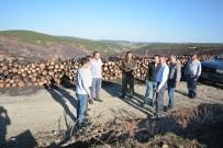 HASAN KESKIN - Bölge Müdürü Keskin Açıklaması Yanan Alanda 300 Bin Karaçam Fidanı Toprakla Buluşturulacak