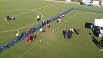 Alman Çoban Köpekleri Çekmeköy'de Yarıştı