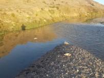 TAVUK ÇİFTLİĞİ - Dicle Nehri'ne Hayvan Pisliği Atan Şahıslar Hakkında Yasal İşlem Başlatıldı
