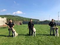POLİS KÖPEĞİ - İstanbul Emniyeti'nin Özel Köpeklerinin Zorlu Eğitimi Görüntülendi