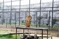 Tarsus'taki Hayvan Parkı İçin Revizyon Çalışması Başlıyor