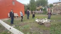 Ardahan'da Kazcılık Eylem Planı Çerçevesinde İhtiyaç Sahibi Vatandaşlara Damızlık Kaz Dağıtıldı
