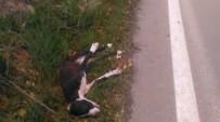 Can Çekişen Yaralı Köpeği Sürücüler Araçlarına Almak İstemedi