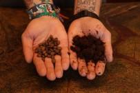 POTASYUM - Kahve Telvesi Gübreye Dönüşüyor