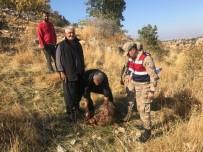 HÜSEYIN DEMIR - Gaziantep'te Kurt Dehşeti