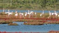 GÖÇMEN KUŞLAR - Flamingolar bu sene erken geldi
