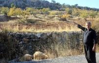 HÜSEYIN DEMIR - Gaziantep'te Kurt Dehşetinden Kaçan 6 Koyun Halen Bulunamadı