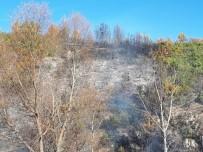Kütahya Emet'te Orman Yangını