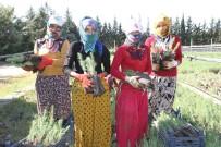Mardin'de 135 Bin Fidan Toprakla Buluşacak
