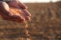 Mezopotamya'nın Bereketli Topraklarında Buğday Ekim Mesaisi