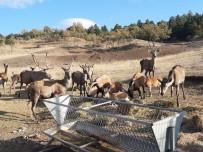 Sıklık Tabiat Parkı'nda Hayvan Sayısı Arttı