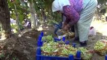 Türkiye'den 56 Ülkeye 120 Milyon Dolarlık Üzüm İhracatı