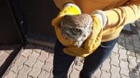 Yaralı Bulunan Baykuş Tedavi Altına Alındı