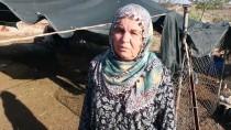 Adana'da Besici Çift Koyunları Çalındığı İddiasıyla Polise Başvurdu