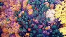 Domaniç Dağlarında Rengarenk Sonbahar
