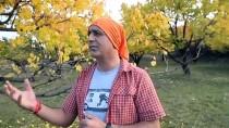 Iğdır'daki Acısu Vadisi'nde Sonbahar Güzelliği