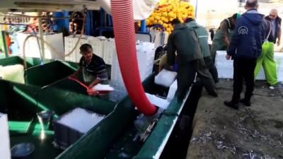 Kastamonu'da Karadeniz'e Açılan Balıkçılar Tonlarca Hamsiyle Döndü