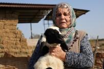 KÜRKÇÜLER - Koyunları Çalınan Ayşe Teyze, 'Koyunlarımı Geri Getirsinler' Diye Gözyaşı Döktü