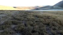 Kuruyan Meke Gölü'nün Üstünü Yabani Otlar Kapladı