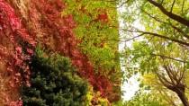 SOMUNCU BABA - Tohma Kanyonu Sonbaharda Doğa Tutkunlarının Uğrak Mekanı