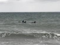 BİSİKLET YOLU - Karadeniz'in Dalgalı Sularında Sörf