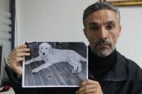 DEDEKTIF - Dedektif Gibi İz Sürüp Kaybolan Köpeğini Amerika'da Buldu