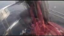 Marmara Denizi'ndeki Yunus Balıkları Tekneye Eşlik Etti