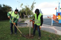 HASAN AKGÜN - Büyükçekmece'de Çocuk Parkları Meyve Ağaçlarıyla Donatılıyor