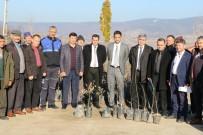 MEHMET KARAKAYA - Demirci'de Üreticilere Ceviz Desteği