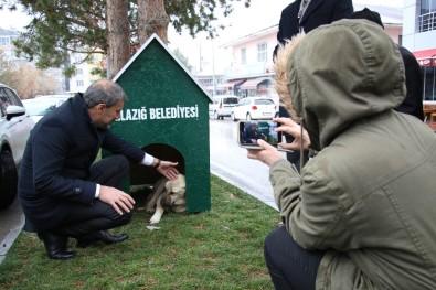 Elazığ'da 'Köpek Dostu İlçe' Kış Nedeniyle Kulübelerle Donatıldı