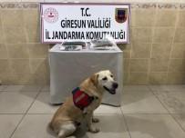 Giresun'da Uyuşturucu Operasyonu Açıklaması 2 Gözaltı