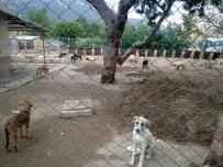 Kemer Belediyesi'nden Yaylara Bırakılan Başıboş Köpeklerle İlgili Açıklama